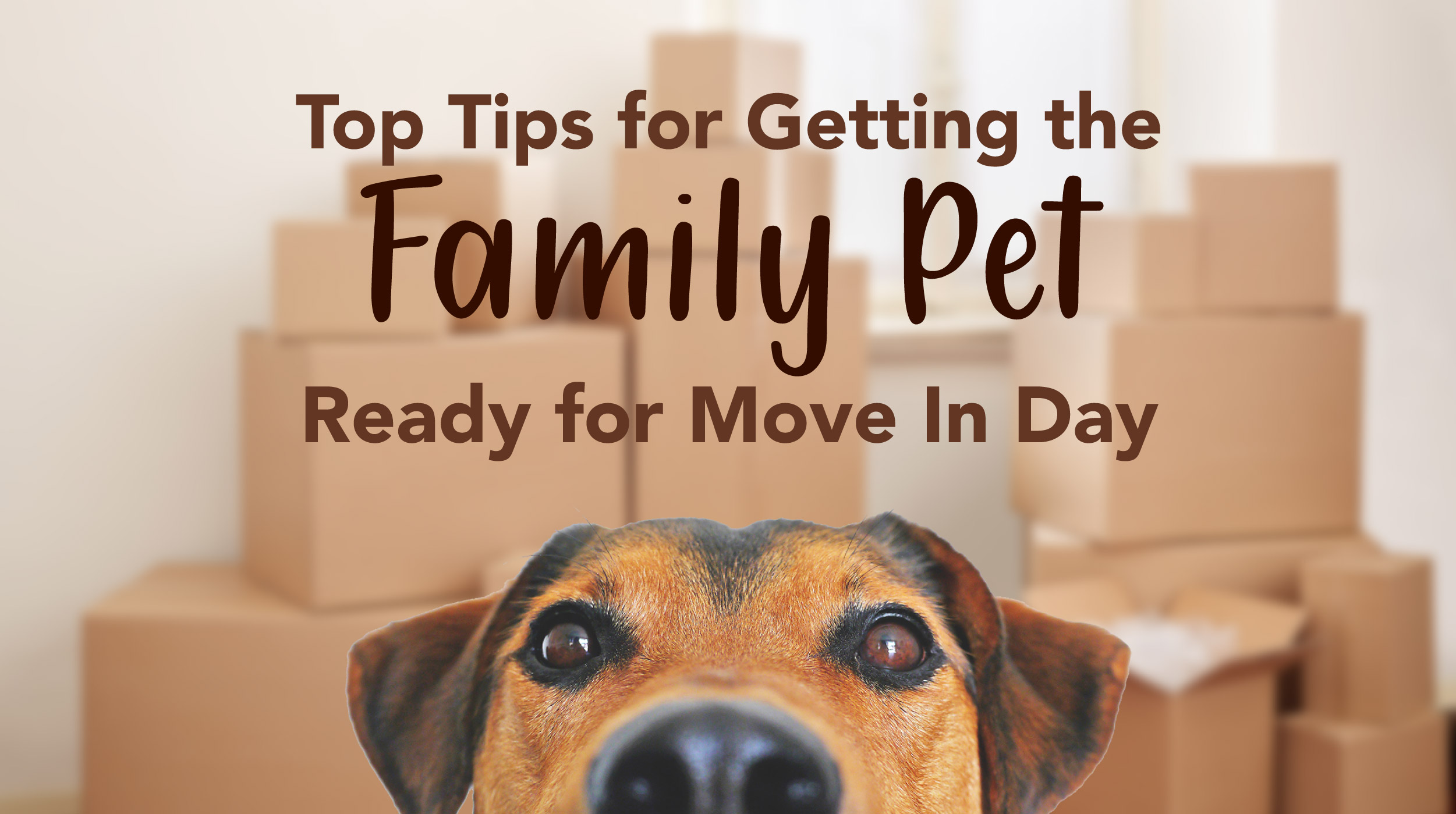 Top Tips for Getting The Family Pet Ready for Move in Day